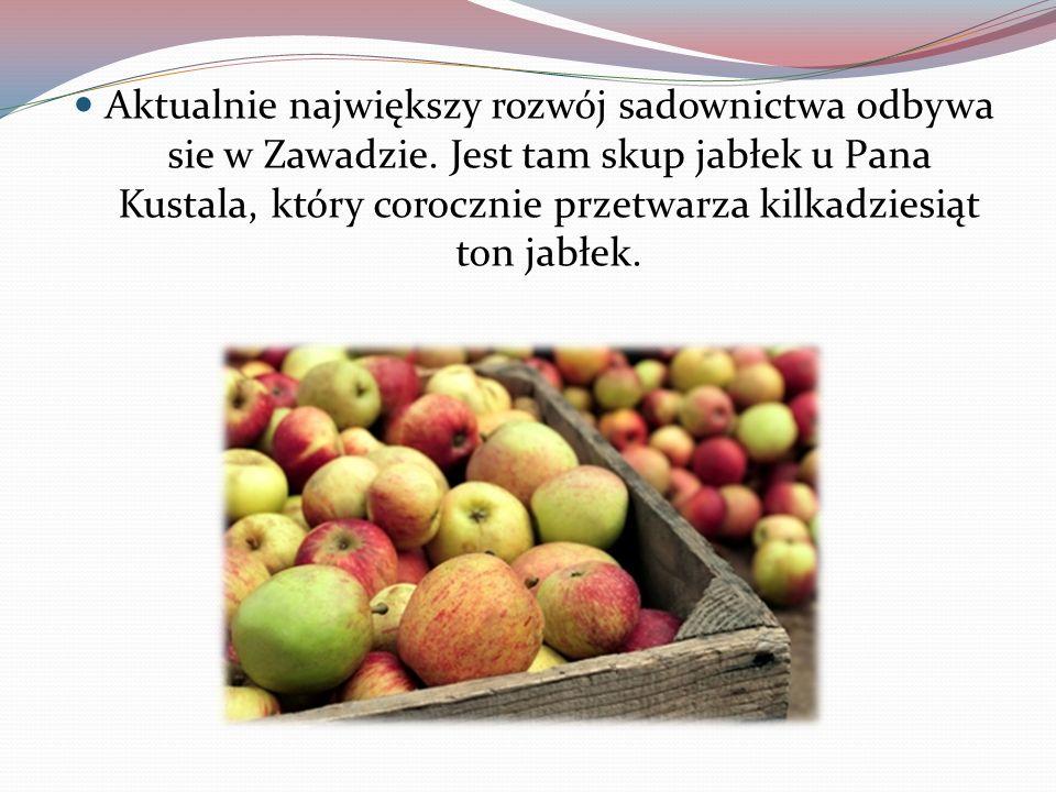 Aktualnie największy rozwój sadownictwa odbywa sie w Zawadzie