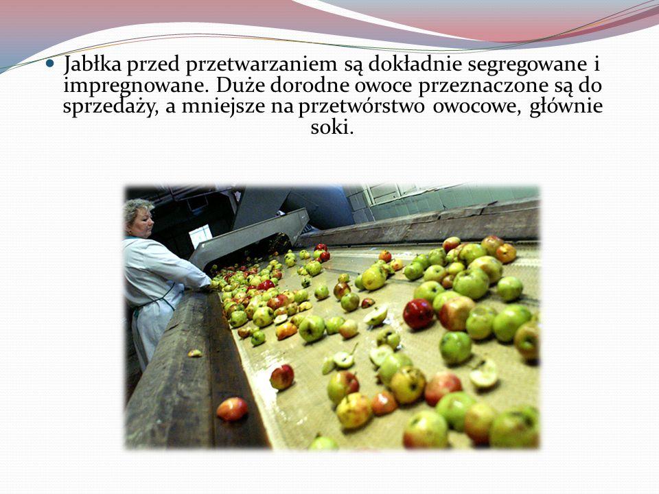 Jabłka przed przetwarzaniem są dokładnie segregowane i impregnowane