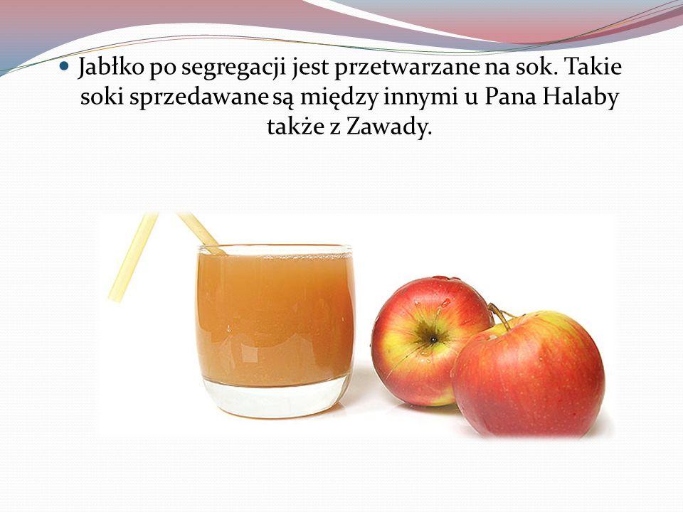 Jabłko po segregacji jest przetwarzane na sok