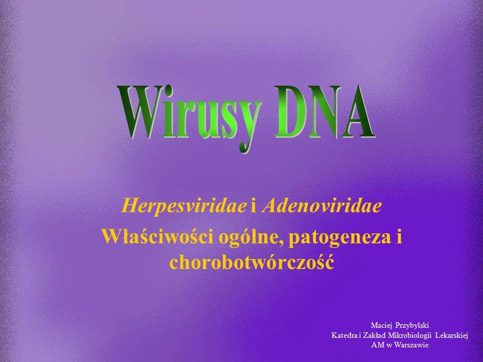 Wirusy DNA Herpesviridae i Adenoviridae