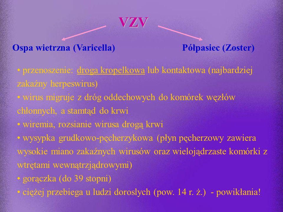 VZV Ospa wietrzna (Varicella) Półpasiec (Zoster)