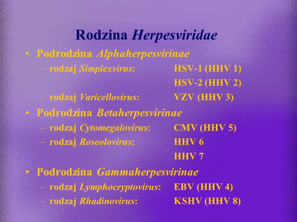 Rodzina Herpesviridae