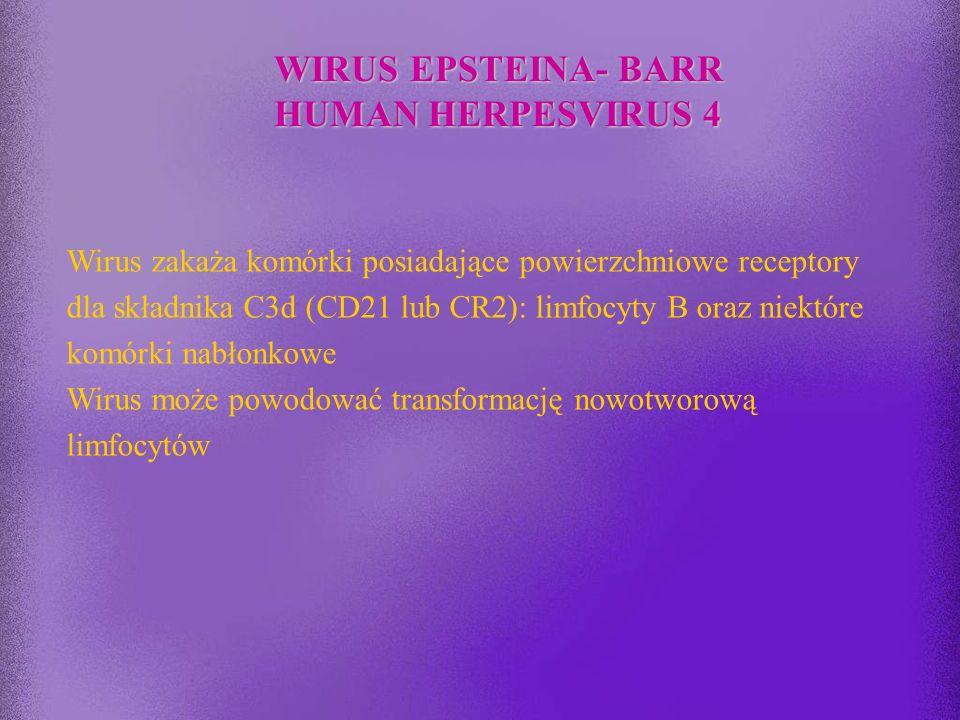 WIRUS EPSTEINA- BARR HUMAN HERPESVIRUS 4