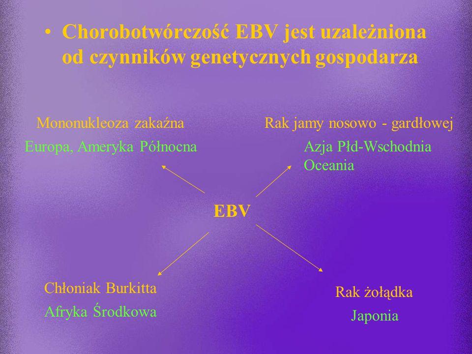 Chorobotwórczość EBV jest uzależniona od czynników genetycznych gospodarza