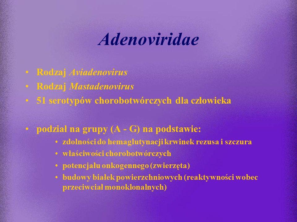 Adenoviridae Rodzaj Aviadenovirus Rodzaj Mastadenovirus
