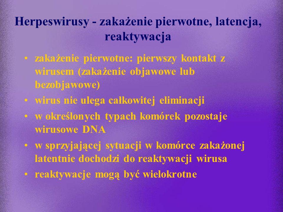 Herpeswirusy - zakażenie pierwotne, latencja, reaktywacja