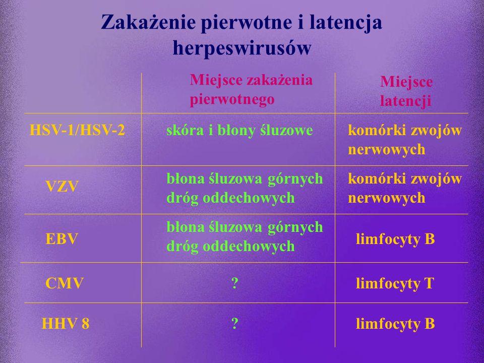Zakażenie pierwotne i latencja herpeswirusów