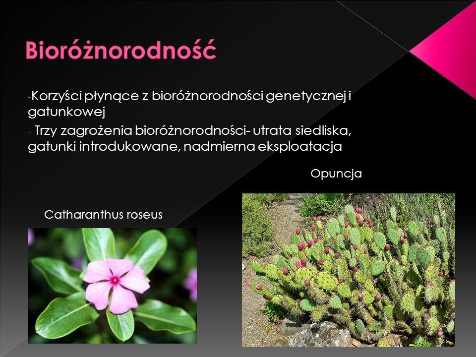 Bioróżnorodność Korzyści płynące z bioróżnorodności genetycznej i gatunkowej.