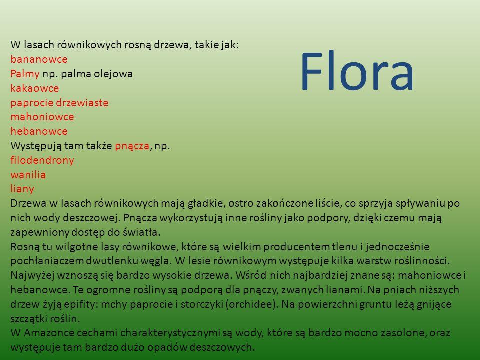 Flora W lasach równikowych rosną drzewa, takie jak: bananowce