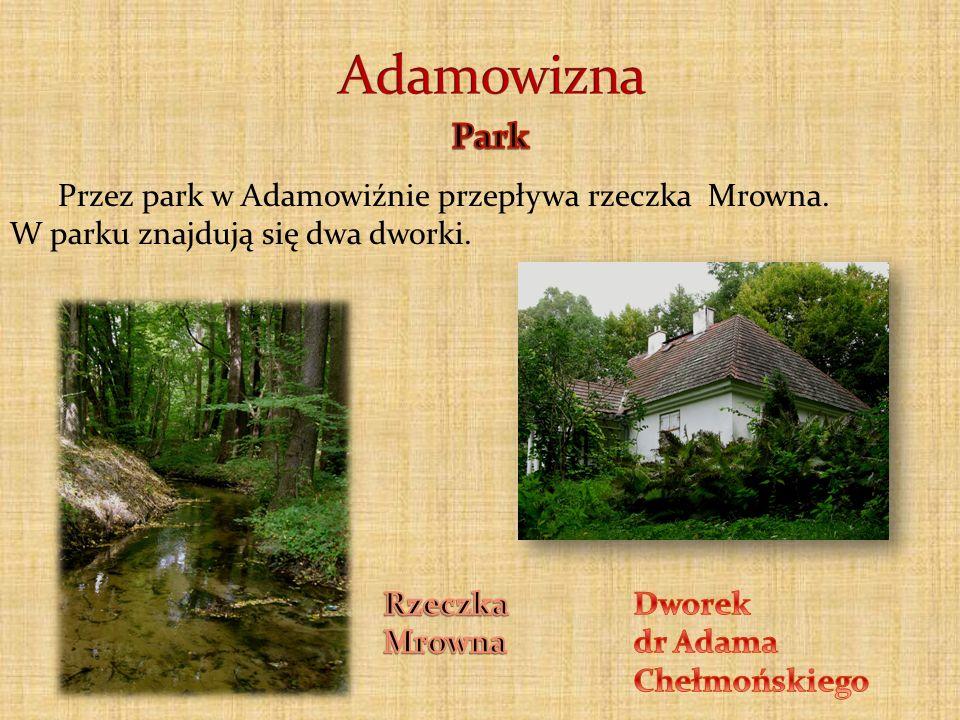 Adamowizna Park Przez park w Adamowiźnie przepływa rzeczka Mrowna.