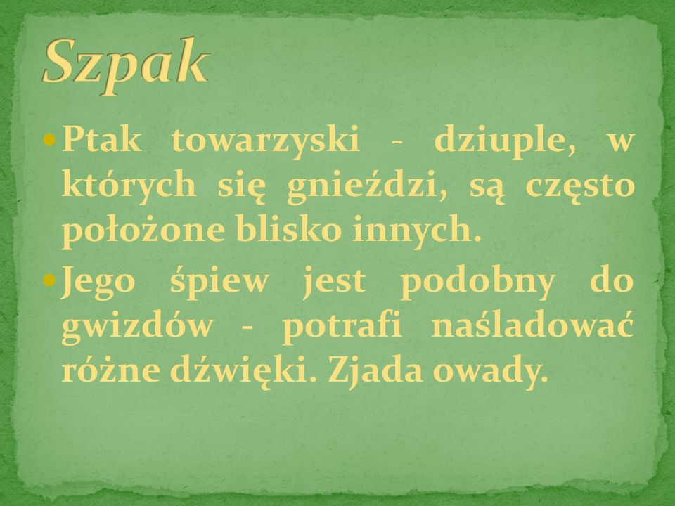 SzpakPtak towarzyski - dziuple, w których się gnieździ, są często położone blisko innych.