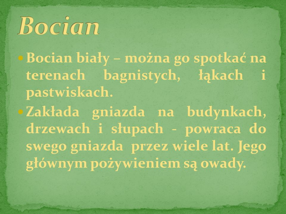 BocianBocian biały – można go spotkać na terenach bagnistych, łąkach i pastwiskach.