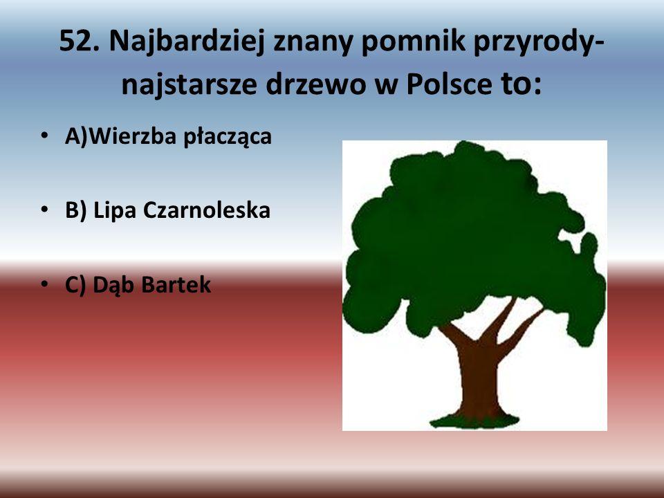 52. Najbardziej znany pomnik przyrody-najstarsze drzewo w Polsce to: