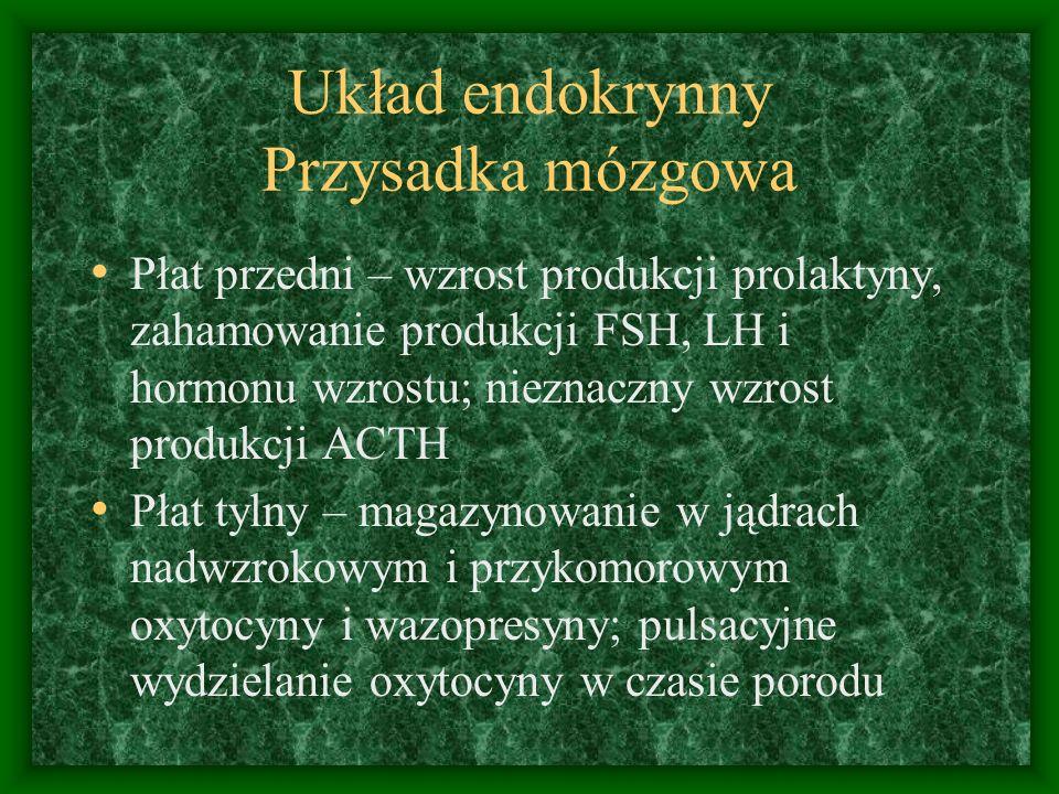 Układ endokrynny Przysadka mózgowa