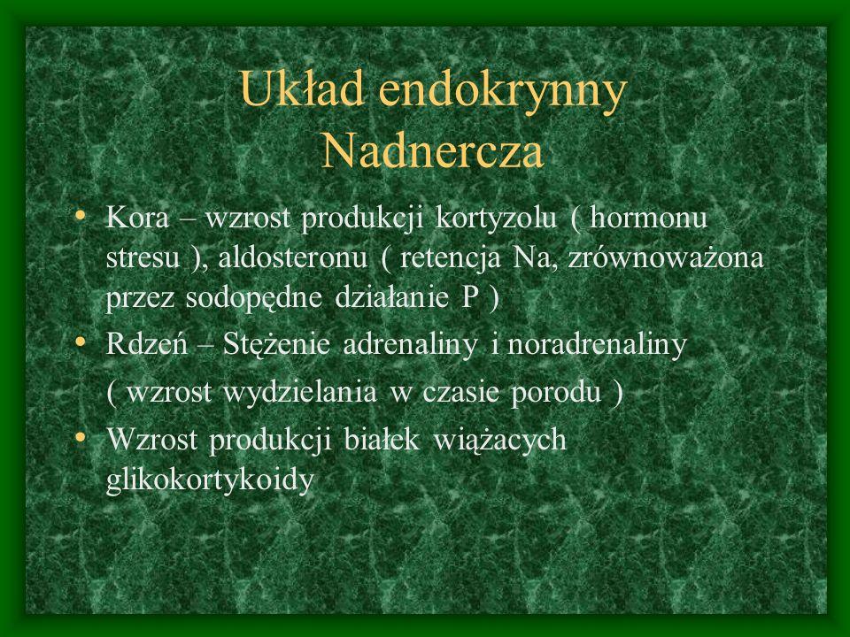 Układ endokrynny Nadnercza