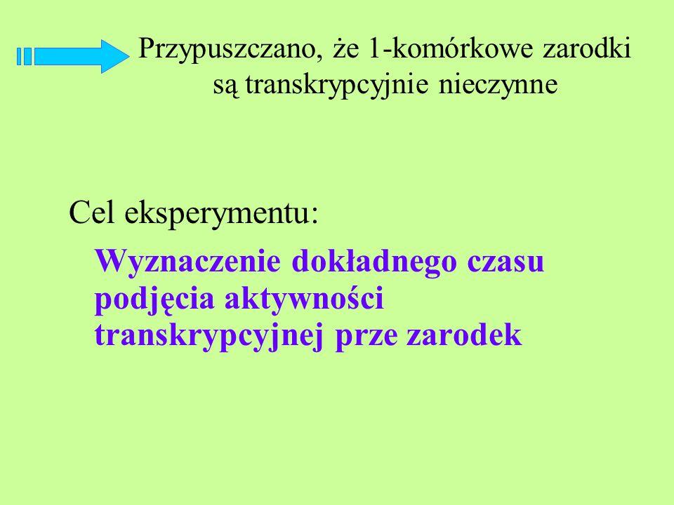 Przypuszczano, że 1-komórkowe zarodki są transkrypcyjnie nieczynne