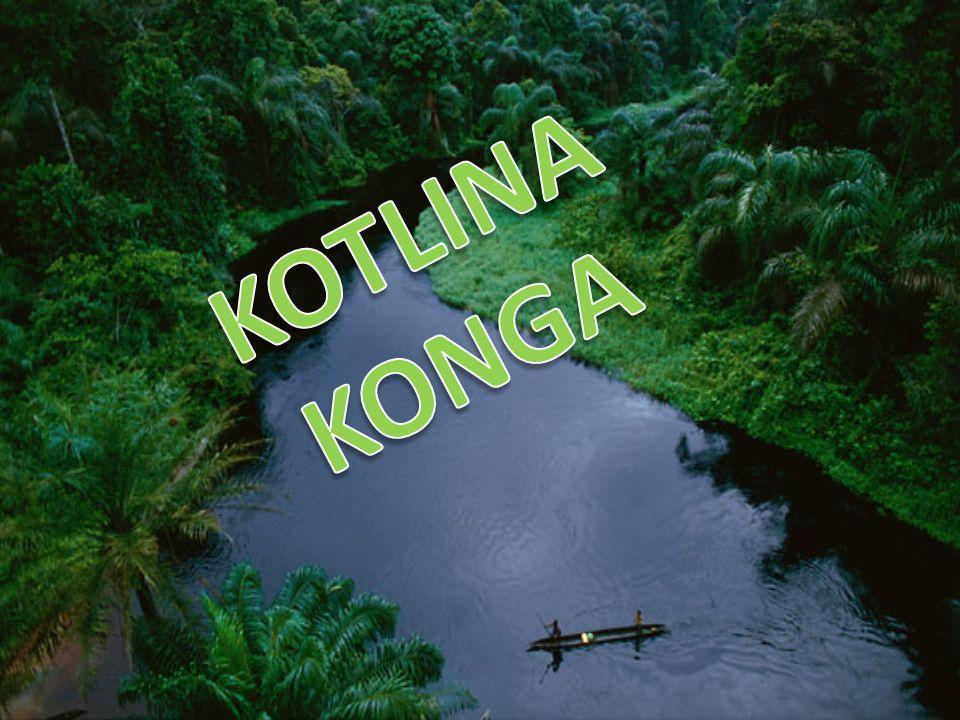KOTLINA KONGA