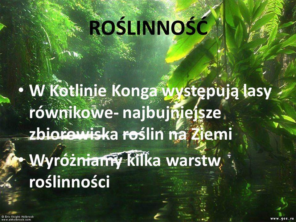 ROŚLINNOŚĆ W Kotlinie Konga występują lasy równikowe- najbujniejsze zbiorowiska roślin na Ziemi.