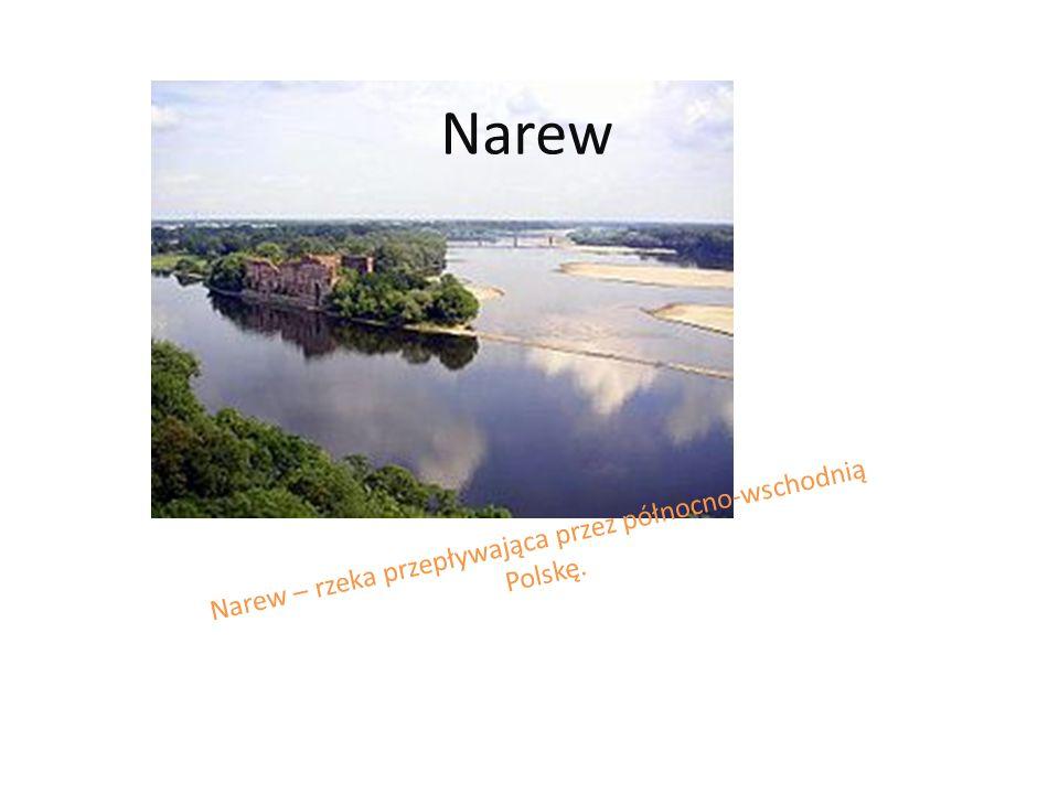 Narew – rzeka przepływająca przez północno-wschodnią Polskę.