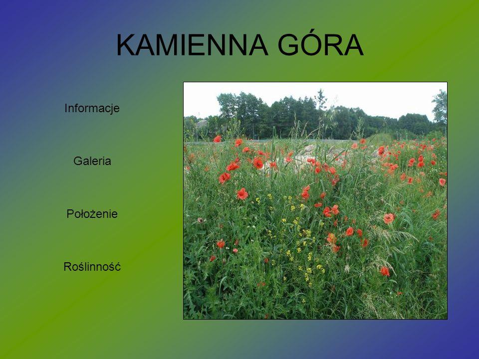 KAMIENNA GÓRA Informacje Galeria Położenie Roślinność