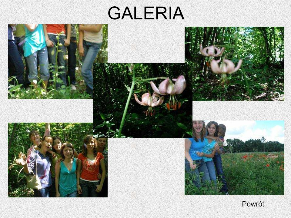 GALERIA Powrót