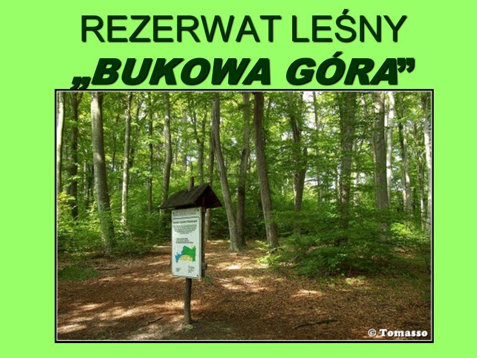 """REZERWAT LEŚNY """"BUKOWA GÓRA"""