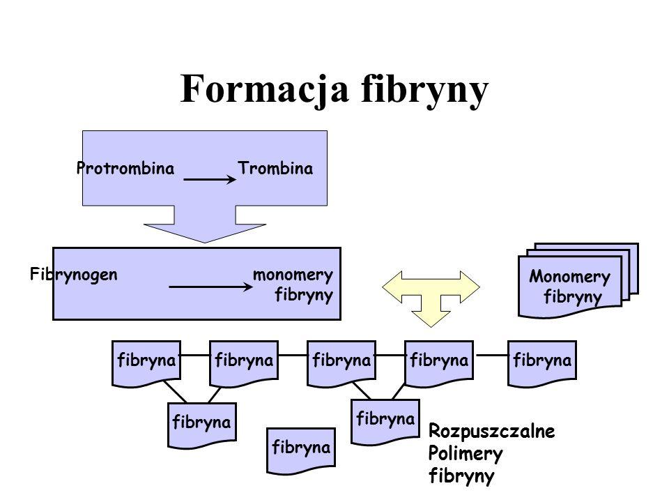 Formacja fibryny Rozpuszczalne Polimery fibryny Protrombina Trombina