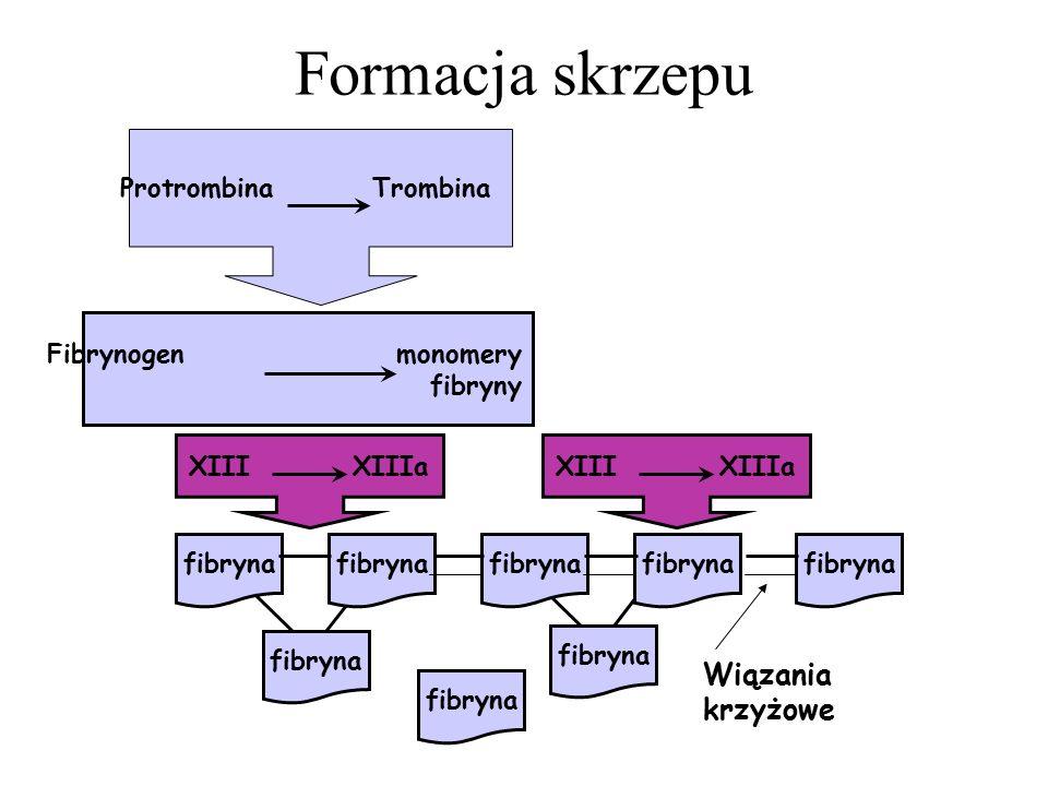 Formacja skrzepu Wiązania krzyżowe Protrombina Trombina
