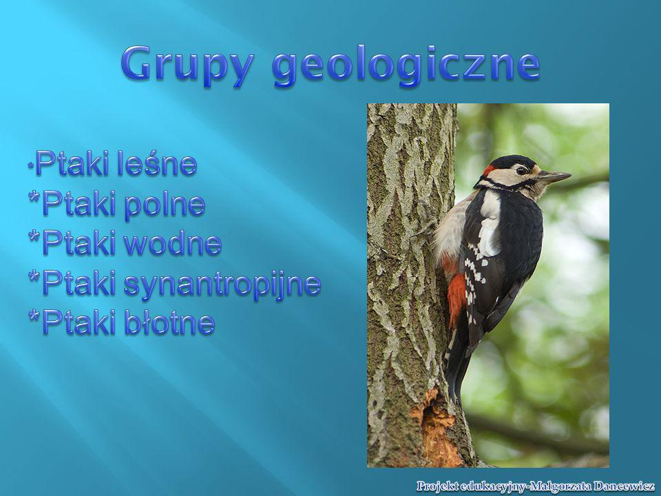 Grupy geologiczne *Ptaki polne *Ptaki wodne *Ptaki synantropijne