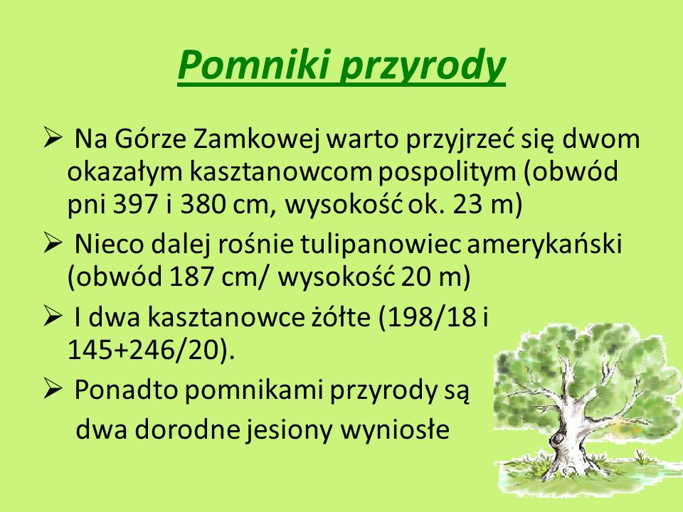 Pomniki przyrody Na Górze Zamkowej warto przyjrzeć się dwom okazałym kasztanowcom pospolitym (obwód pni 397 i 380 cm, wysokość ok. 23 m)
