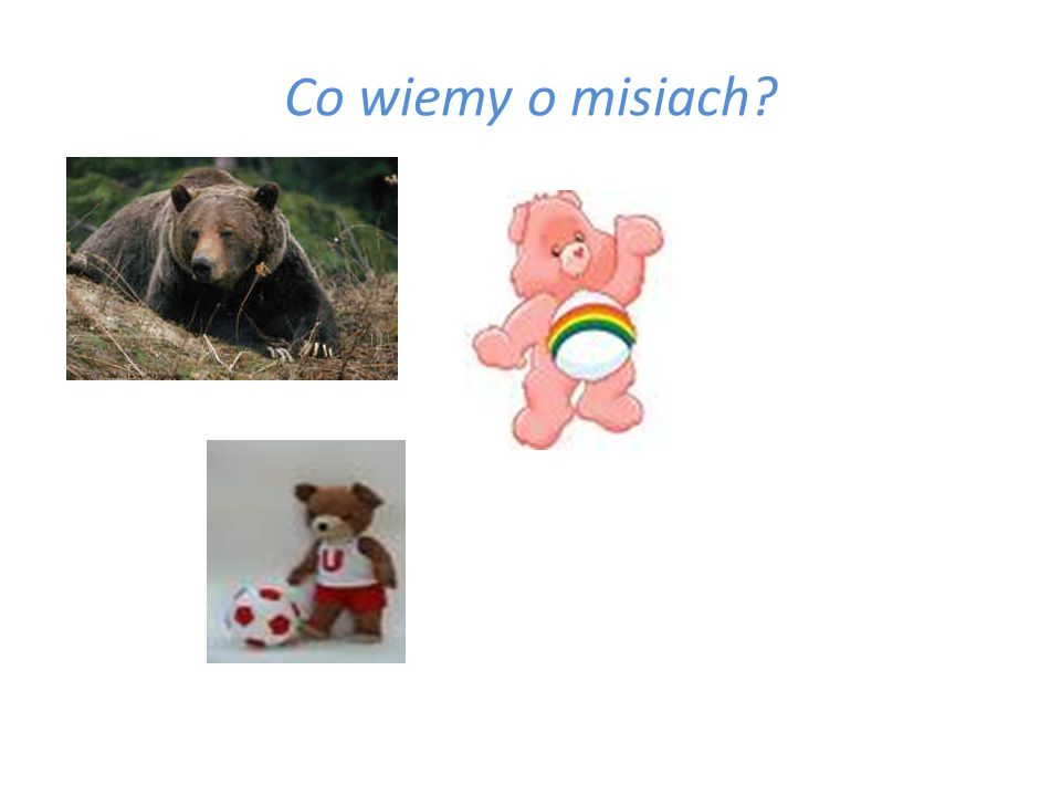 Co wiemy o misiach