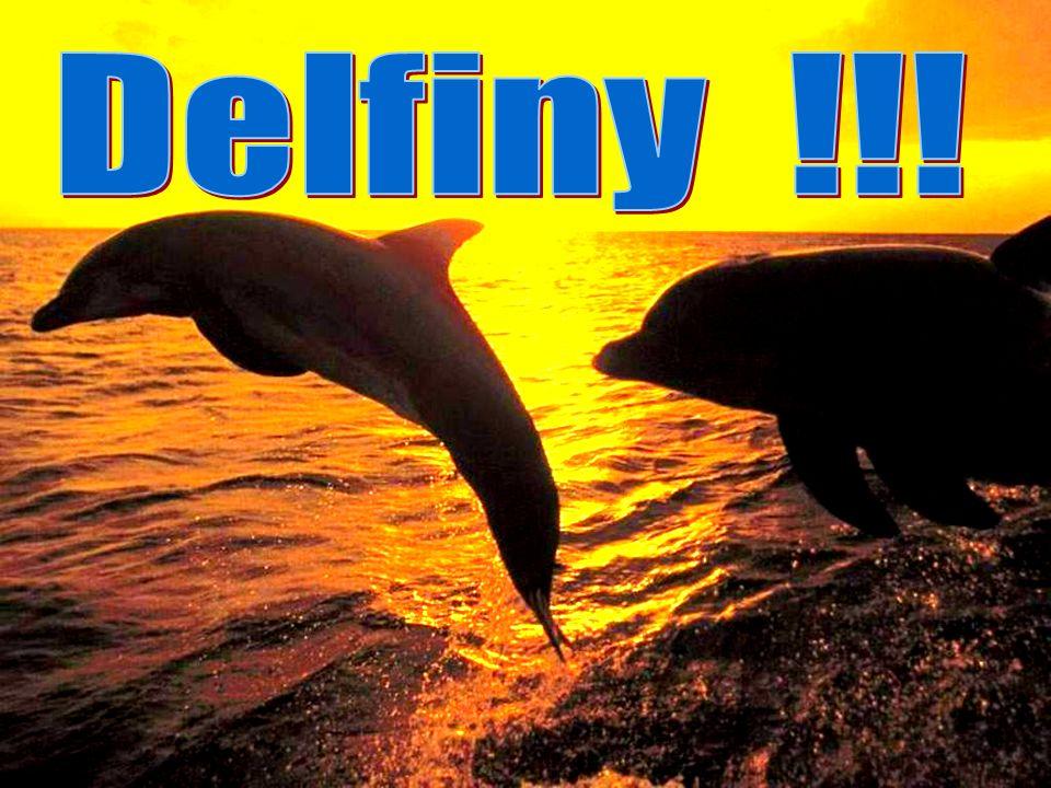 Delfiny !!!