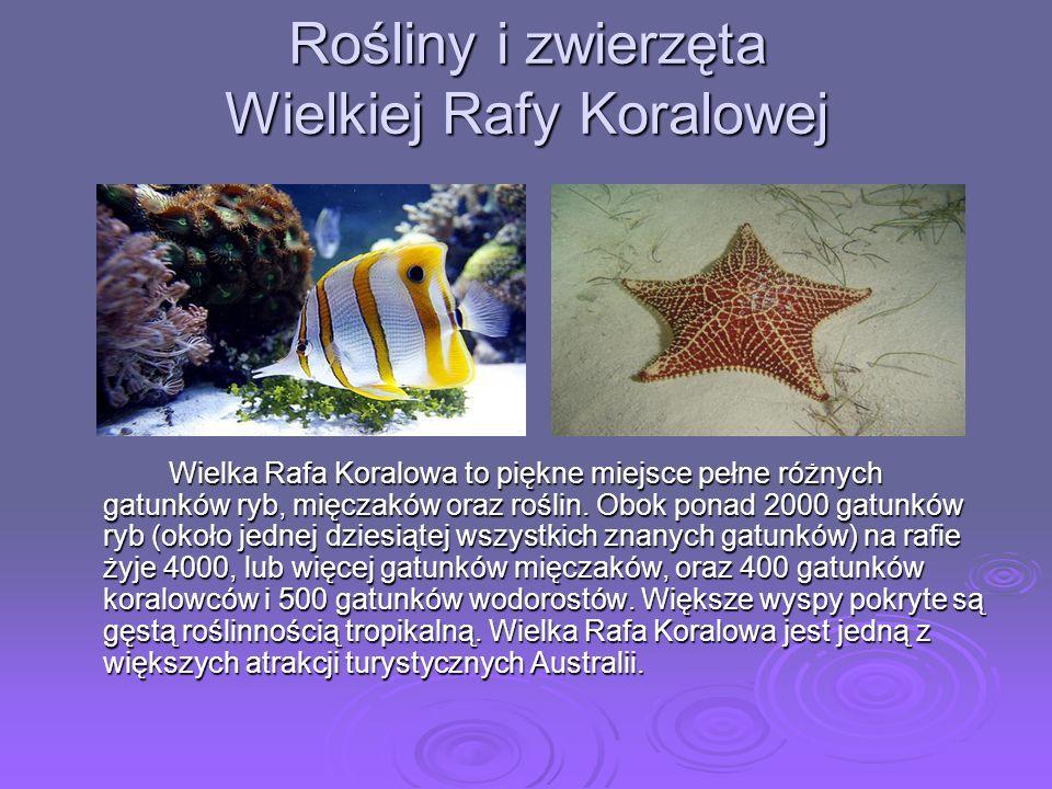 Rośliny i zwierzęta Wielkiej Rafy Koralowej