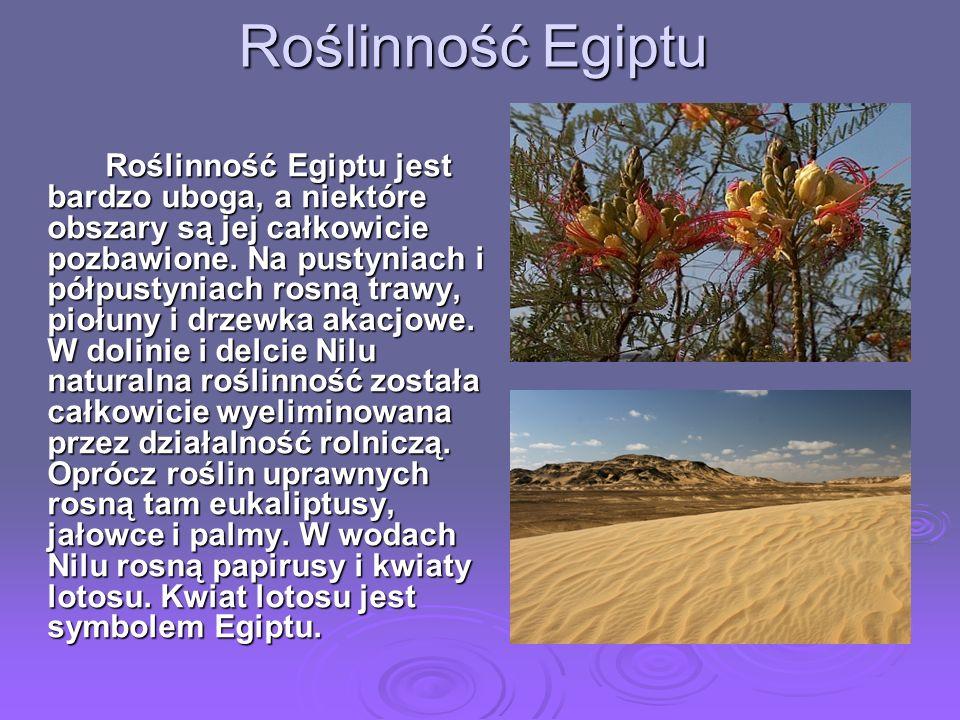 Roślinność Egiptu