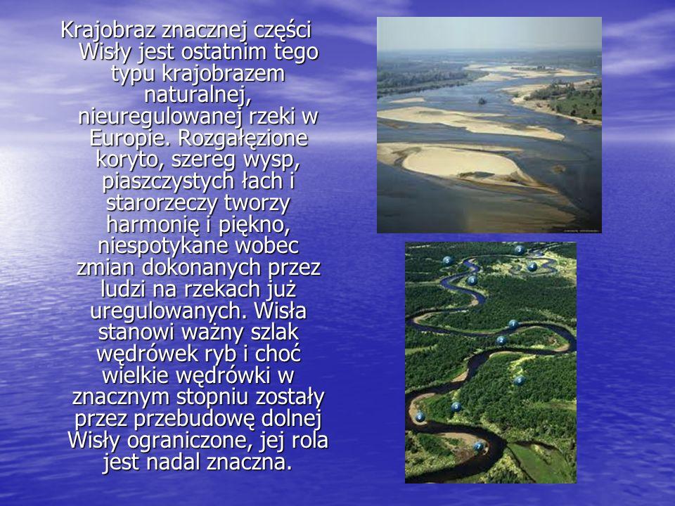 Krajobraz znacznej części Wisły jest ostatnim tego typu krajobrazem naturalnej, nieuregulowanej rzeki w Europie.