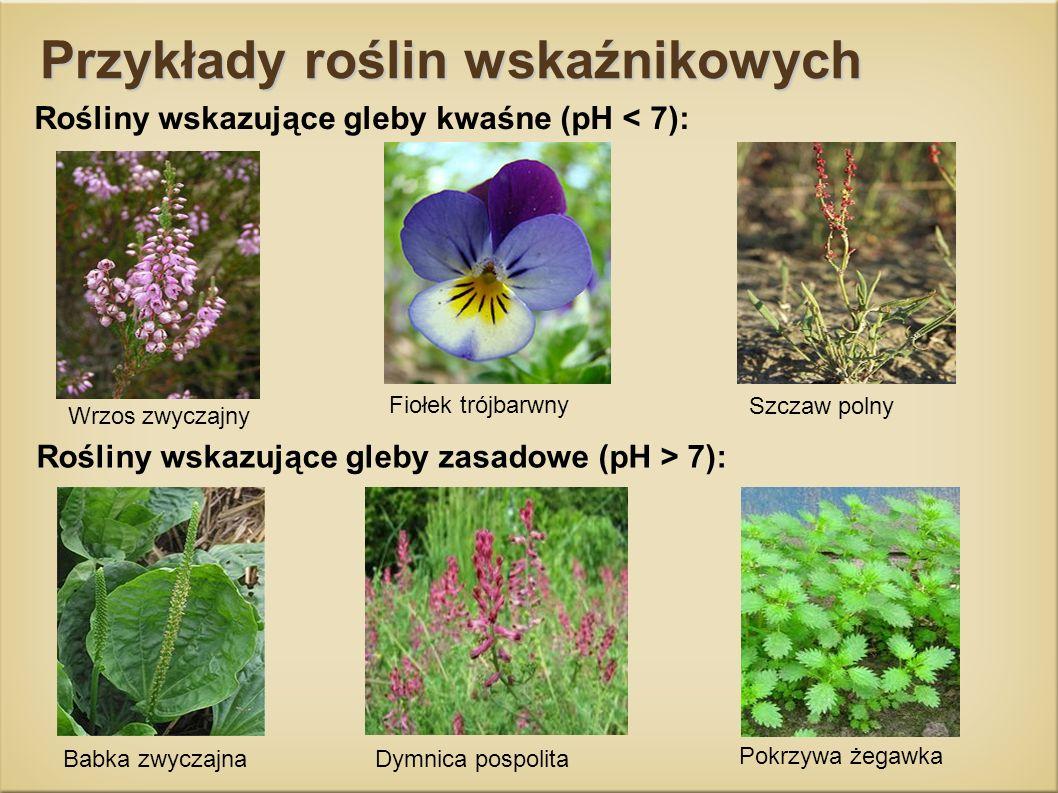 Przykłady roślin wskaźnikowych