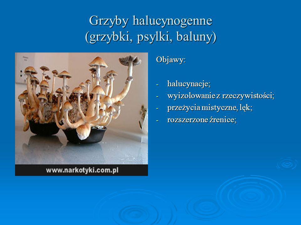 Grzyby halucynogenne (grzybki, psylki, baluny)
