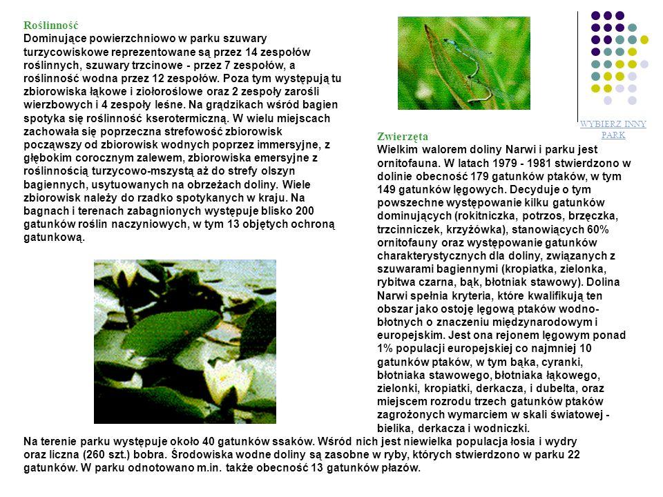 Roślinność Zwierzęta Zwierzęta Roślinność