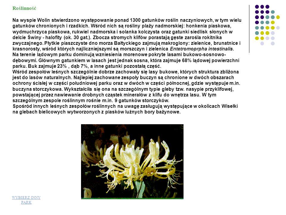 Roślinność Roślinność