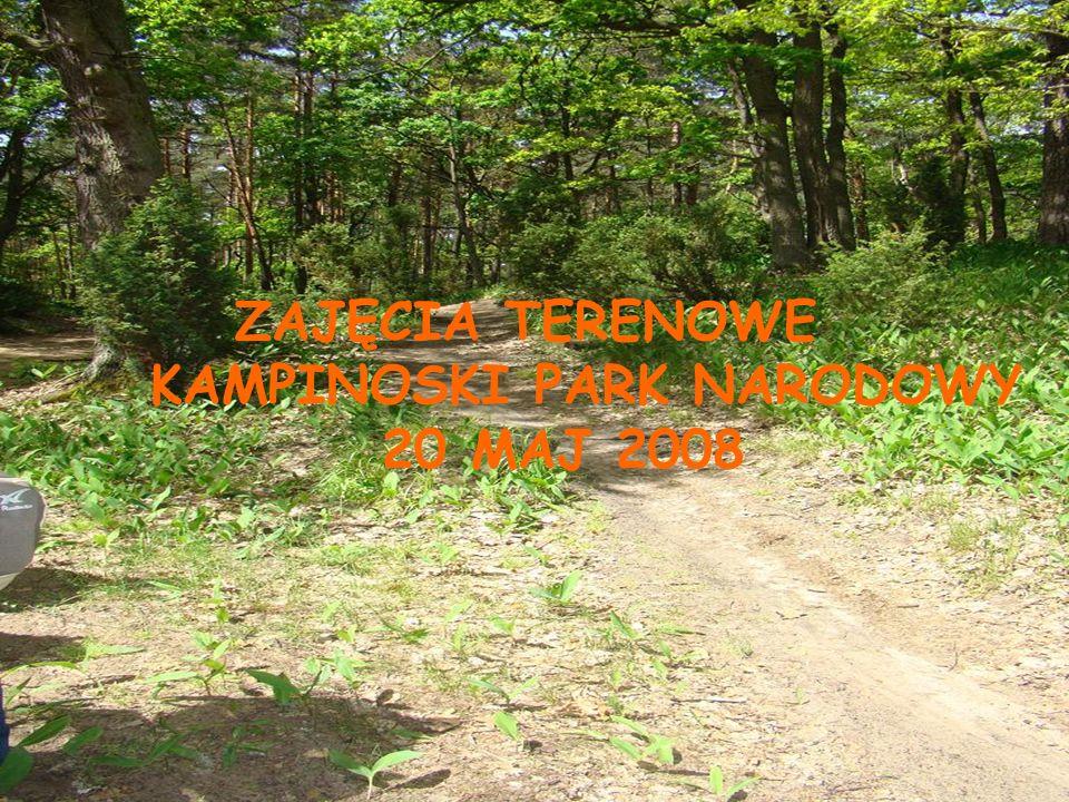 ZAJĘCIA TERENOWE KAMPINOSKI PARK NARODOWY 20 MAJ 2008