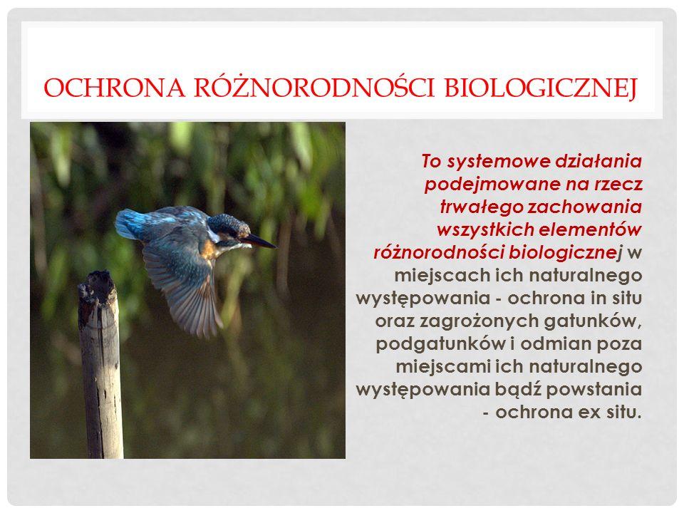 Ochrona różnorodności biologicznej