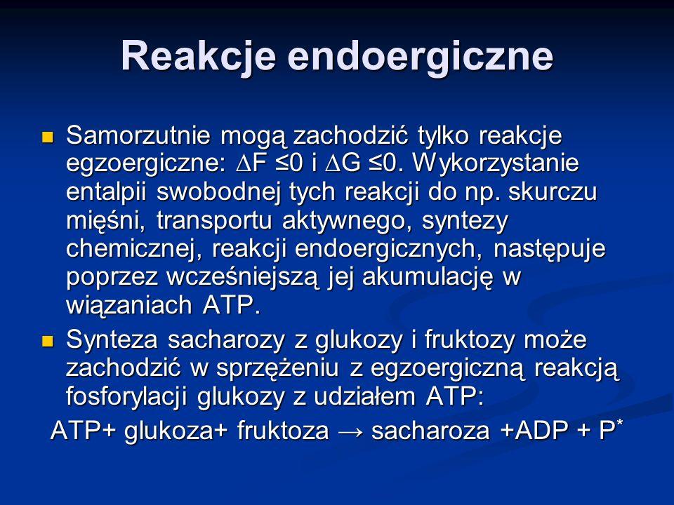 ATP+ glukoza+ fruktoza → sacharoza +ADP + P*