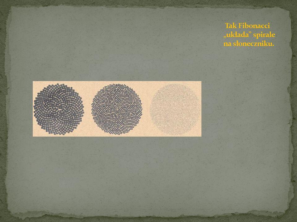 """Tak Fibonacci """"układa spirale na słoneczniku."""