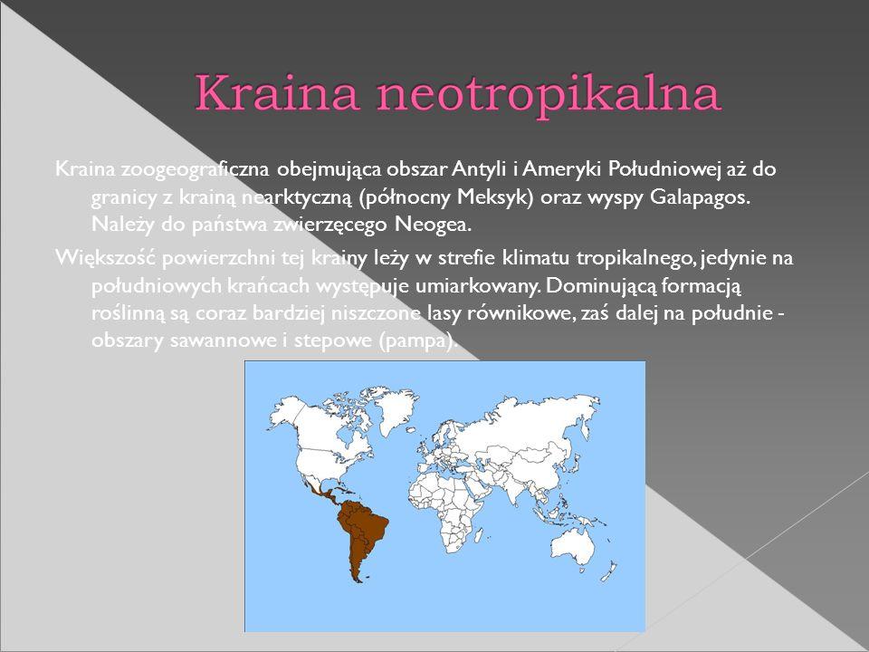Kraina zoogeograficzna obejmująca obszar Antyli i Ameryki Południowej aż do granicy z krainą nearktyczną (północny Meksyk) oraz wyspy Galapagos. Należy do państwa zwierzęcego Neogea.