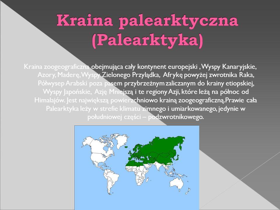 Kraina zoogeograficzna obejmująca cały kontynent europejski , Wyspy Kanaryjskie, Azory, Maderę, Wyspy Zielonego Przylądka, Afrykę powyżej zwrotnika Raka, Półwysep Arabski poza pasem przybrzeżnym zaliczanym do krainy etiopskiej, Wyspy Japońskie, Azję Mniejszą i te regiony Azji, które leżą na północ od Himalajów.