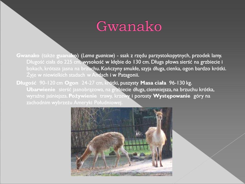 Gwanako (także guanako) (Lama guanicoe) - ssak z rzędu parzystokopytnych, przodek lamy. Długość ciała do 225 cm, wysokość w kłębie do 130 cm. Długa płowa sierść na grzbiecie i bokach, krótsza jasna na brzuchu. Kończyny smukłe, szyja długa, cienka, ogon bardzo krótki. Żyje w niewielkich stadach w Andach i w Patagonii.