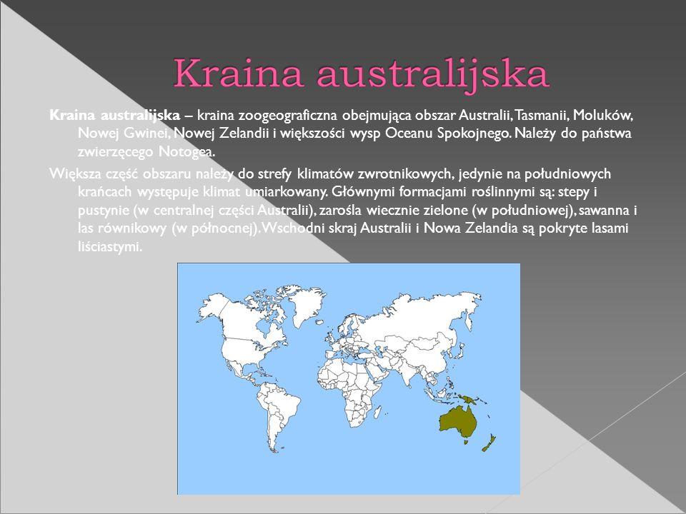 Kraina australijska – kraina zoogeograficzna obejmująca obszar Australii, Tasmanii, Moluków, Nowej Gwinei, Nowej Zelandii i większości wysp Oceanu Spokojnego. Należy do państwa zwierzęcego Notogea.