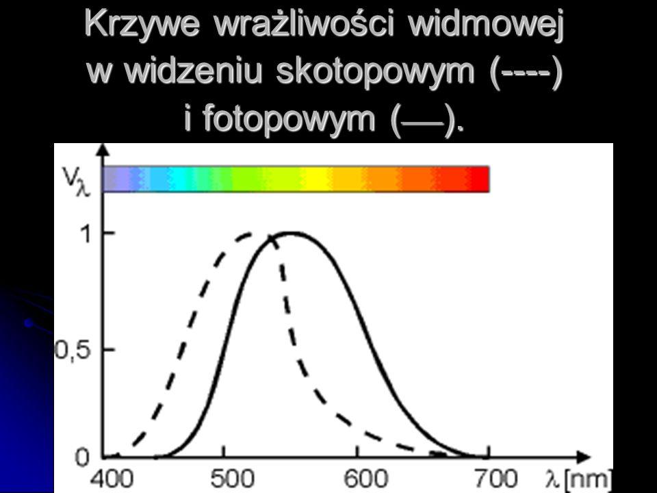 Krzywe wrażliwości widmowej w widzeniu skotopowym (----) i fotopowym (___).
