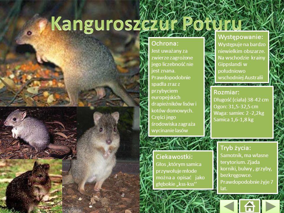 Kanguroszczur Poturu Występowanie: Występuje na bardzo niewielkim obszarze. Na wschodzie krainy Gippslandi w południowo wschodniej Australii.