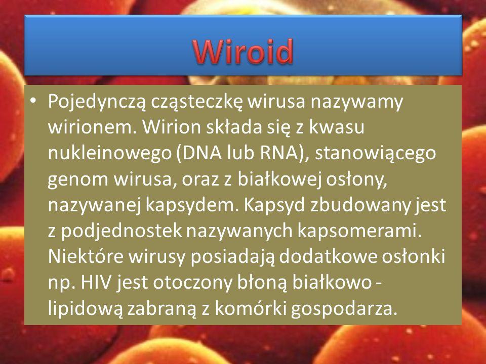 Wiroid